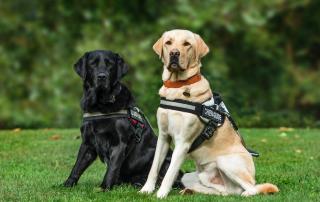 ¿Qué es un perro guía?